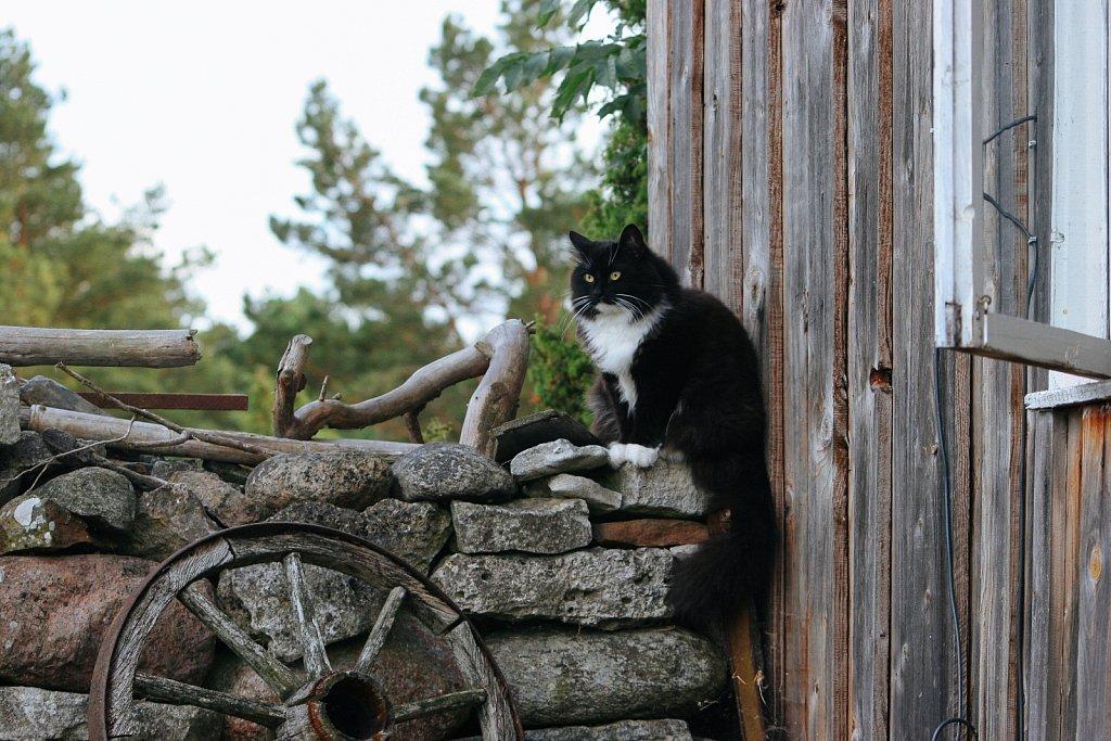 Kass jälgib rebaseid