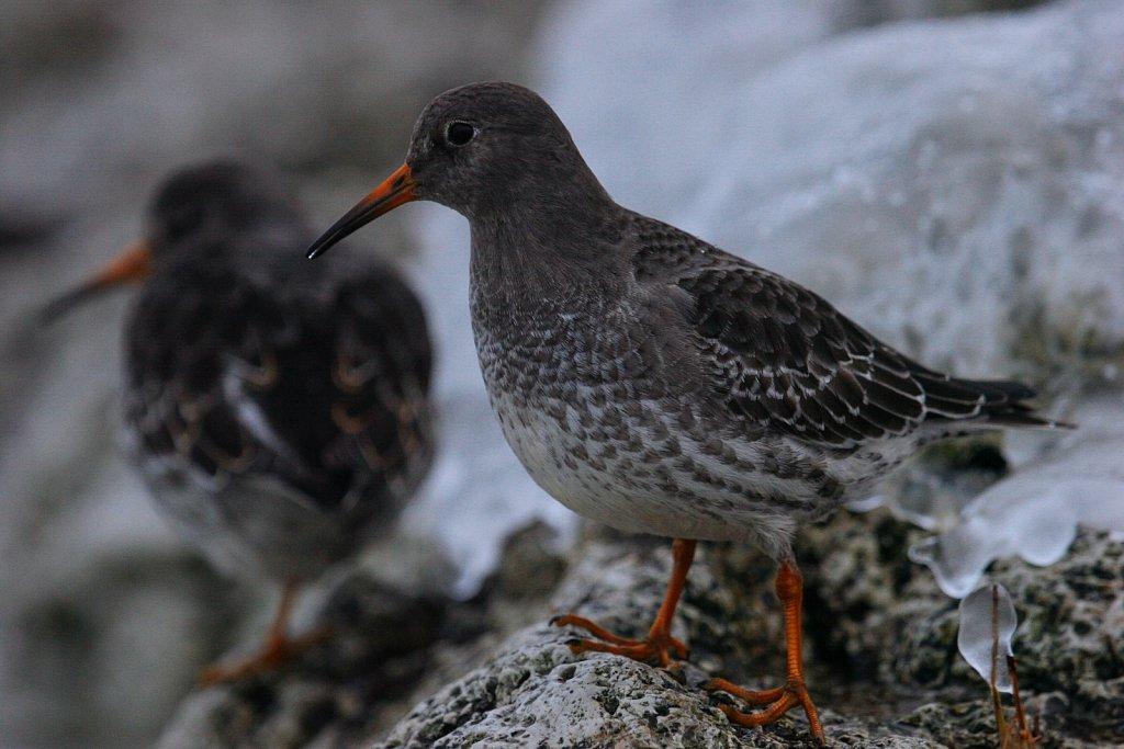 linnud-276-1.jpg