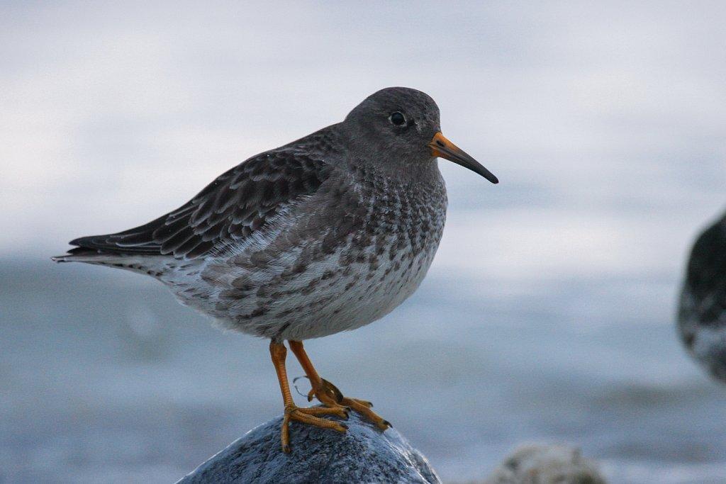 linnud-111-1.jpg