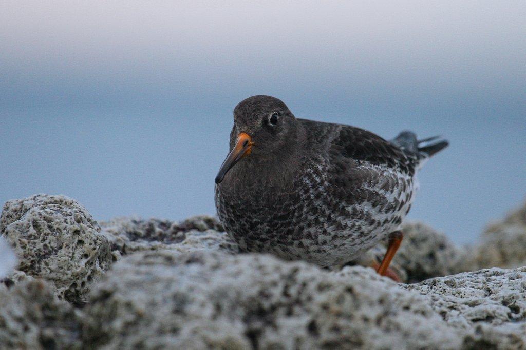 linnud-159-1.jpg