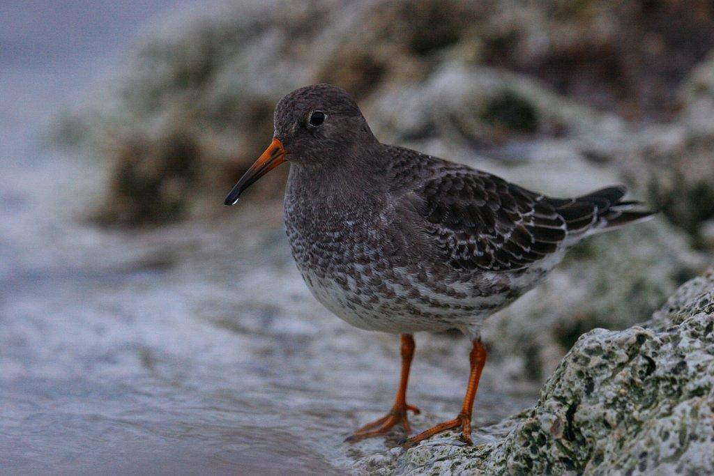 linnud-260-1.jpg